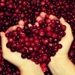Cranberries (Vaccinium myrtillus)